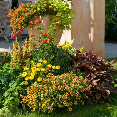 beet balkonpflanzen seite 15 das gr ne medienhaus. Black Bedroom Furniture Sets. Home Design Ideas