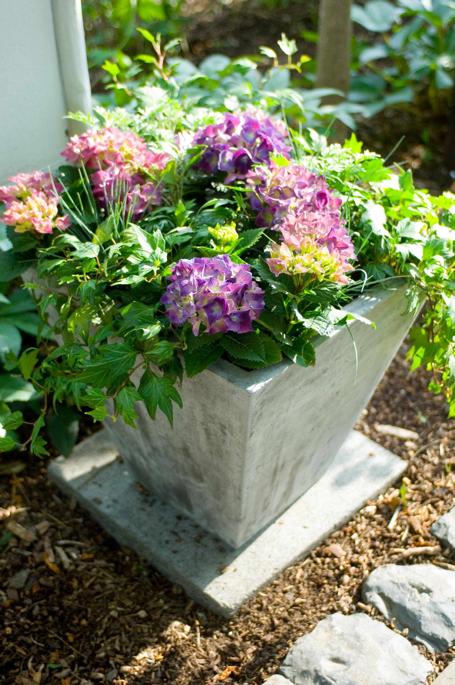 Blütenpracht auch an schattigen Plätzen