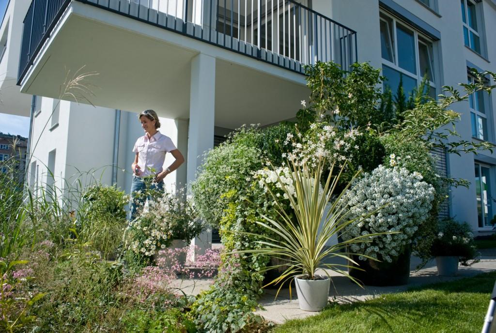 Das Grüne Medienhaus» Beet- & Balkonpflanzen » Moderne ...