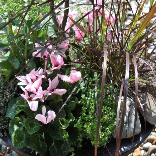 Mit frischen Blüten gegen den Herbst-Blues