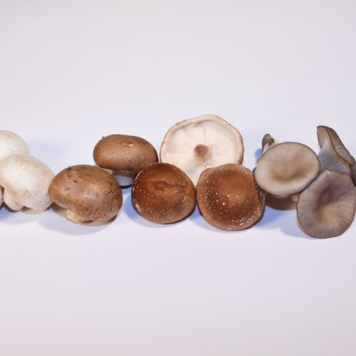 Pilze senken das Brustkrebsrisiko
