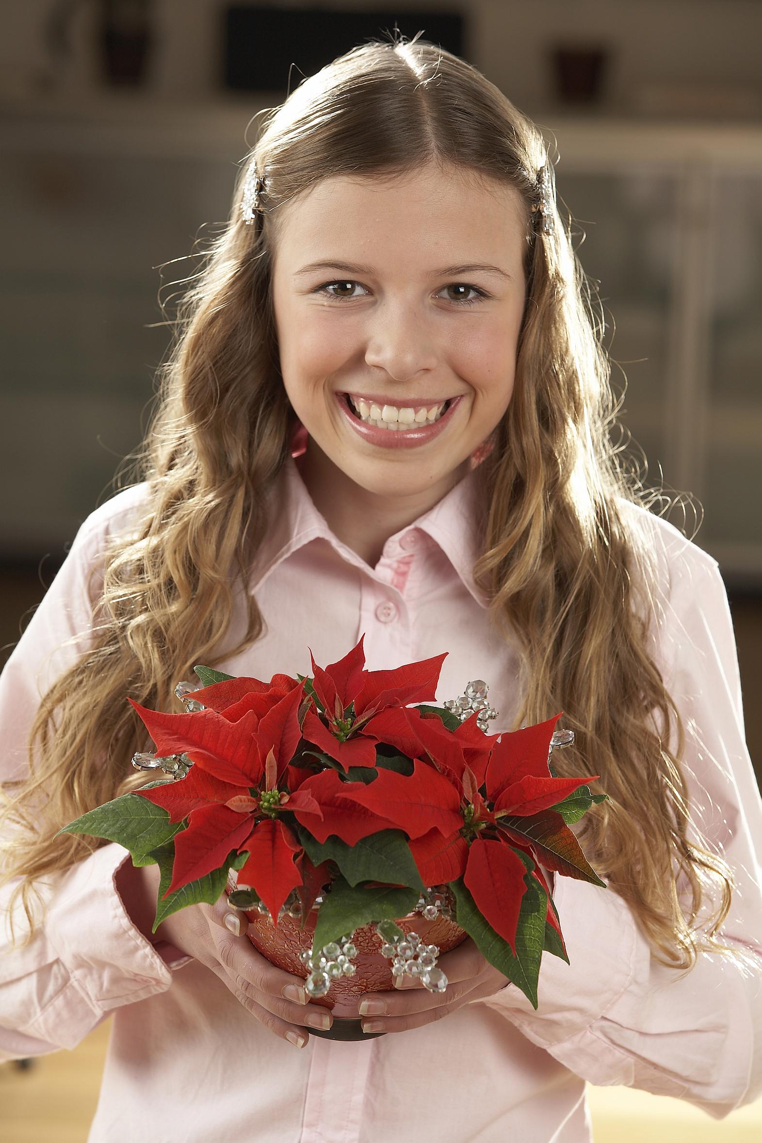 Viel mehr als nur ein Stern – Am 12. Dezember ist Poinsettia Day, der Tag des Weihnachtssterns
