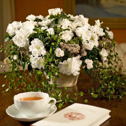 pflanzen im winter seite 4 das gr ne medienhaus. Black Bedroom Furniture Sets. Home Design Ideas
