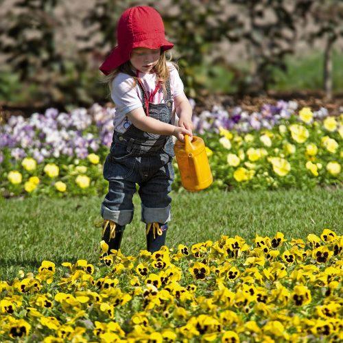 GMH_2011_06_01: Primeln & Co - Frühjahrsblüher bringen Farbe in den Garten