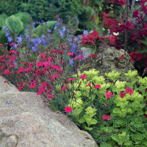 GMH_2011_09_01_Kommen ganz groß raus - Stauden für kleine Gärten