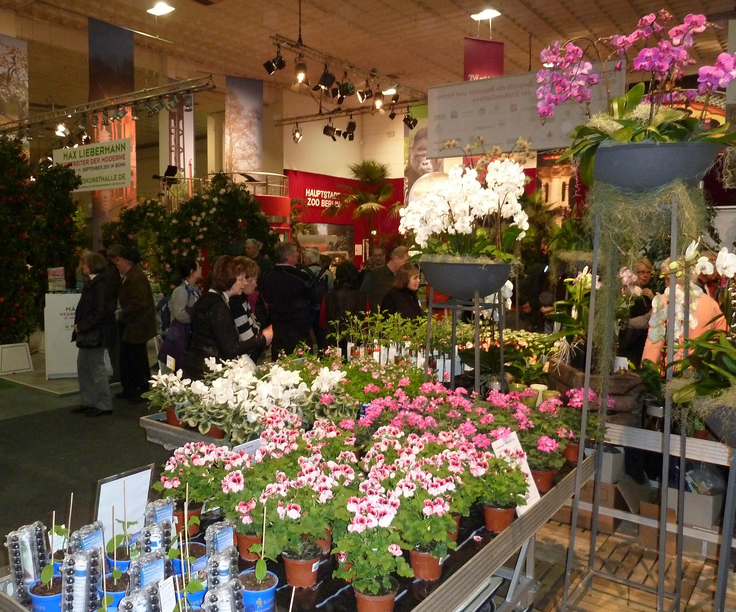 Pünktlich zum Saisonstart locken die Pflanzenneuheiten 2011