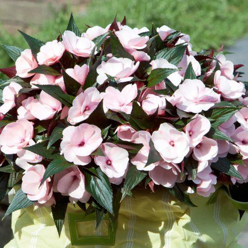 GMH_2011_10_02: Pünktlich zum Saisonstart locken die Pflanzenneuheiten 2011