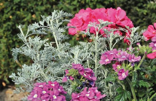 GMH_2011_10_03: Pünktlich zum Saisonstart locken die Pflanzenneuheiten 2011