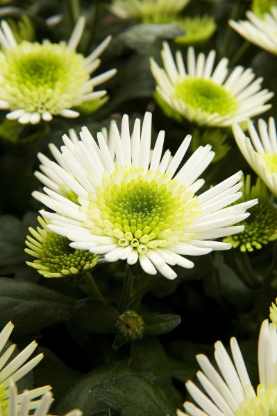 GMH_2011_10_04: Pünktlich zum Saisonstart locken die Pflanzenneuheiten 2011