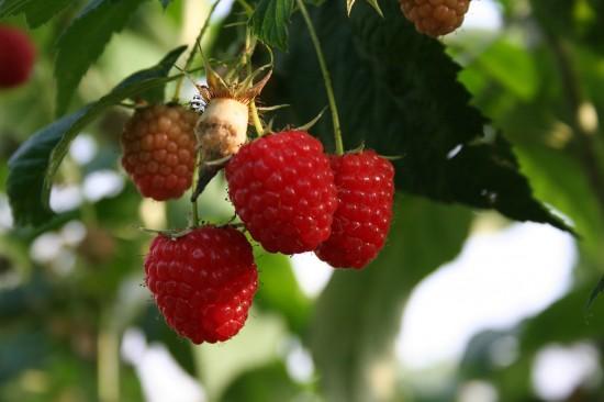 GMH_2011_10_06: Pünktlich zum Saisonstart locken die Pflanzenneuheiten 2011