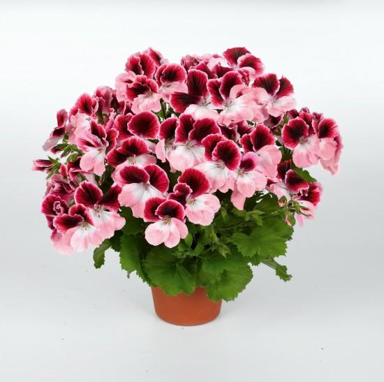 GMH_2011_10_09: Pünktlich zum Saisonstart locken die Pflanzenneuheiten 2011
