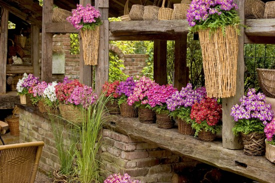 GMH_2011_10_11: Pünktlich zum Saisonstart locken die Pflanzenneuheiten 2011