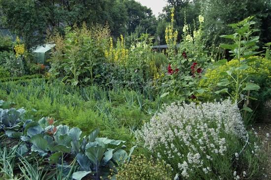 GMH_BDS_2011_13_01: Stauden und essbare Pflanzen für den Garten