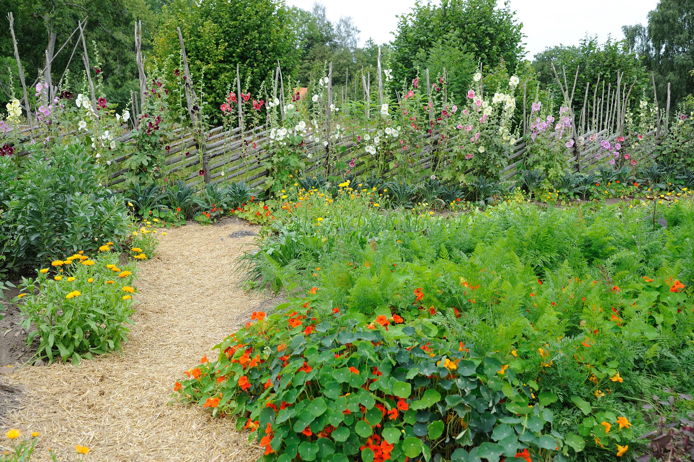 Zusatzbilder zum Artikel: Schönes und Nützliches – Stauden und essbare Pflanzen für den Garten