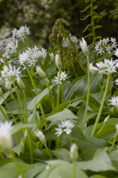 GMH_BDS_2011_13_04_Stauden und essbare Pflanzen für den Garten