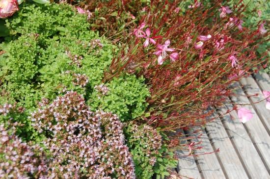GMH_BDS_2011_13_05_Stauden und essbare Pflanzen für den Garten