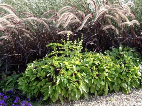 GMH_BDS_2011_13_06_Stauden und essbare Pflanzen für den Garten