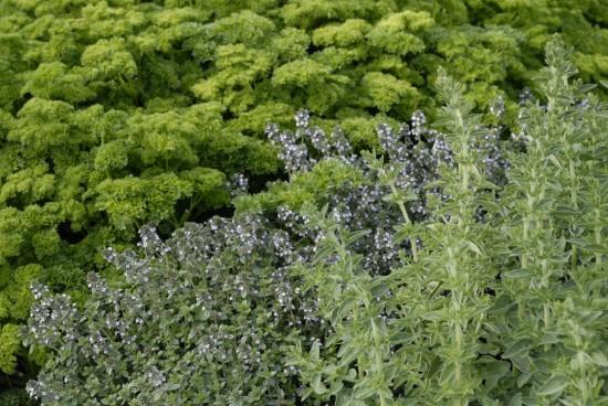 GMH_BDS_2011_13_10_Stauden und essbare Pflanzen für den Garten