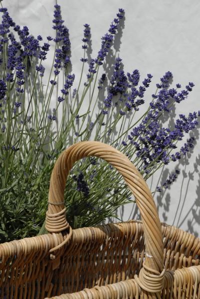 GMH_BDS_2011_13_11_Stauden und essbare Pflanzen für den Garten