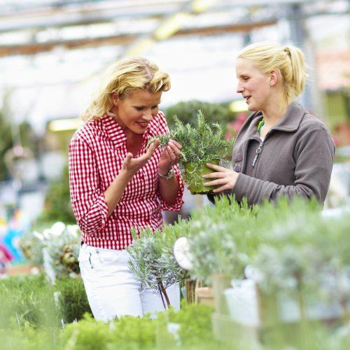 GMH_2011_20_01 Verführung pur: Kräuter und Duftpflanzen heben die Stimmung