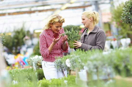 Verführung pur: Kräuter und Duftpflanzen heben die Stimmung