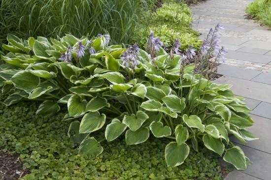 GMH_BDS_2011_18_01_Stauden: Attraktive Lückenfüller für Pflanzbeete im Garten