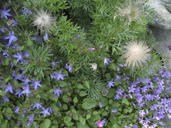 GMH_BDS_2011_18_02 Stauden: Attraktive Lückenfüller für Pflanzbeete im Garten