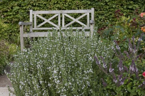 Stauden: Attraktive Lückenfüller für Pflanzbeete im Garten