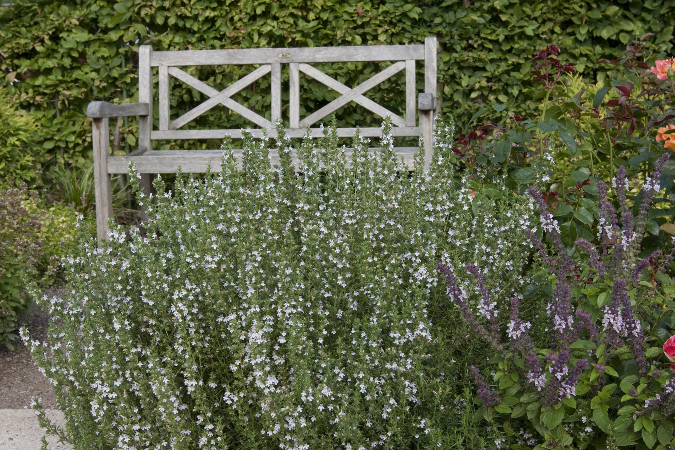 stauden attraktive l ckenf ller f r pflanzbeete im garten das gr ne medienhaus. Black Bedroom Furniture Sets. Home Design Ideas