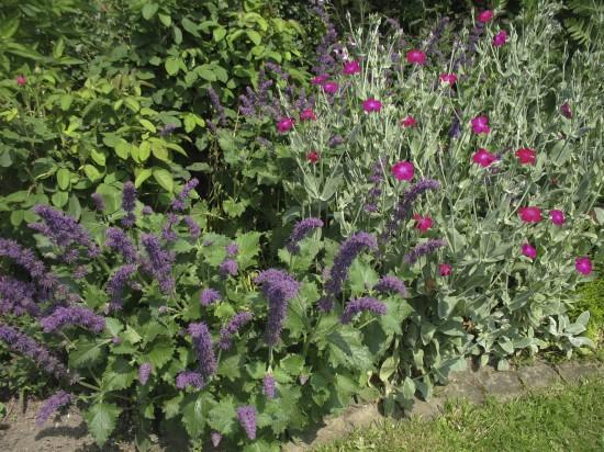 GMH_BDS_2011_18_05 Stauden: Attraktive Lückenfüller für Pflanzbeete im Garten