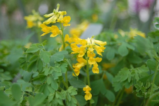 GMH_BDS_2011_18_06 Stauden: Attraktive Lückenfüller für Pflanzbeete im Garten