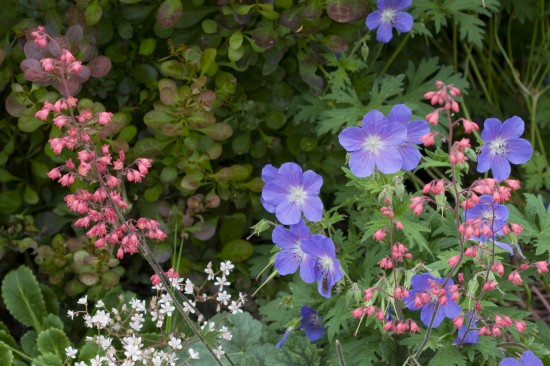 GMH_BDS_2011_18_07 Stauden: Attraktive Lückenfüller für Pflanzbeete im Garten