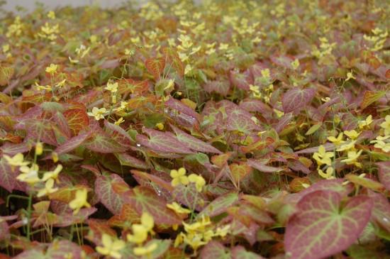 GMH_BDS_2011_18_09 Stauden: Attraktive Lückenfüller für Pflanzbeete im Garten
