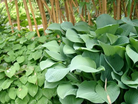 GMH_BDS_2011_18_10_Stauden: Attraktive Lückenfüller für Pflanzbeete im Garten