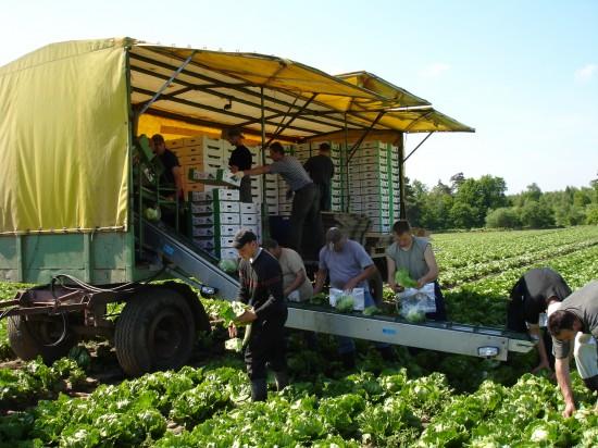 Auf Gemüse aus der Region setzen