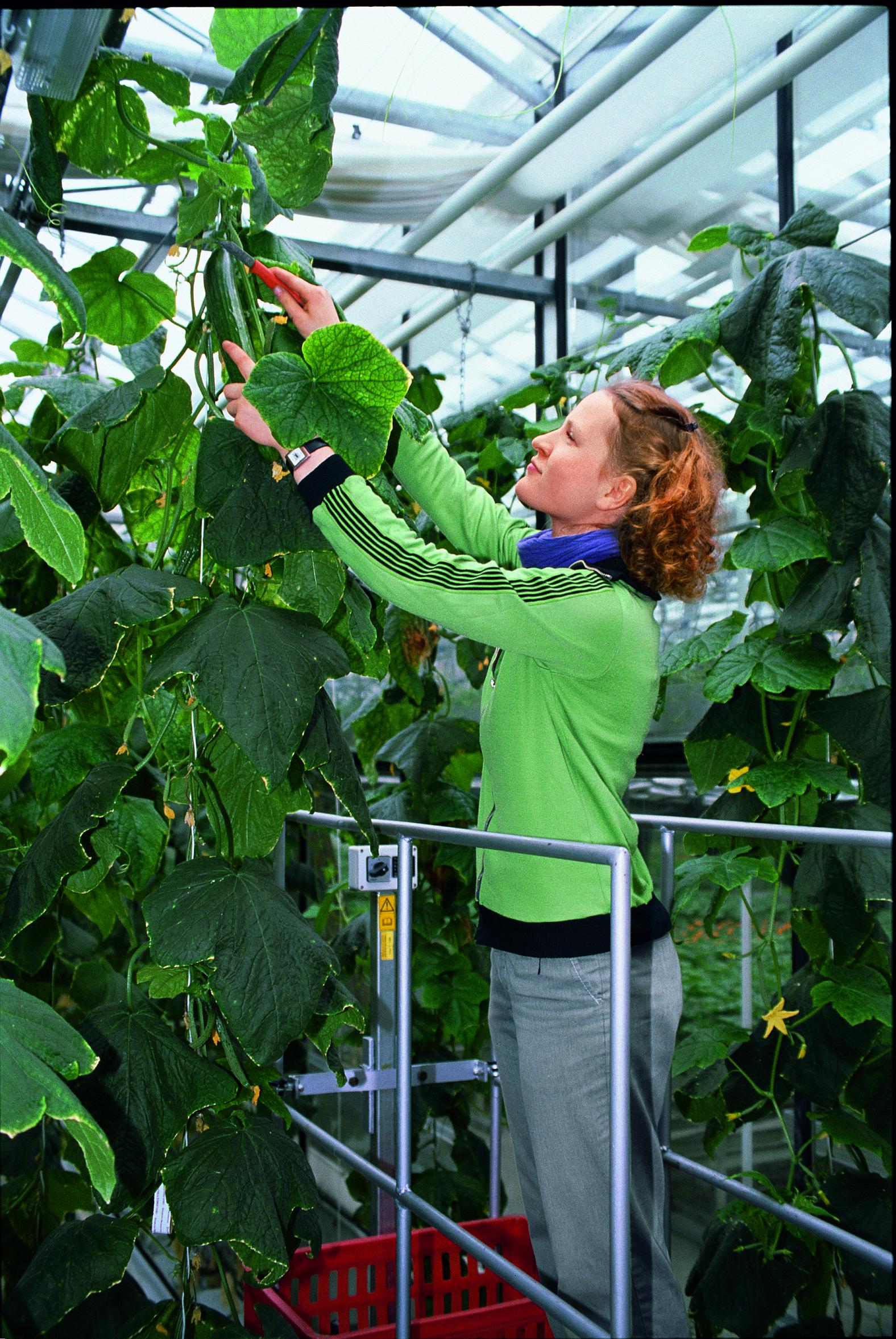 Rasche Rückkehr zu frischem Gemüse