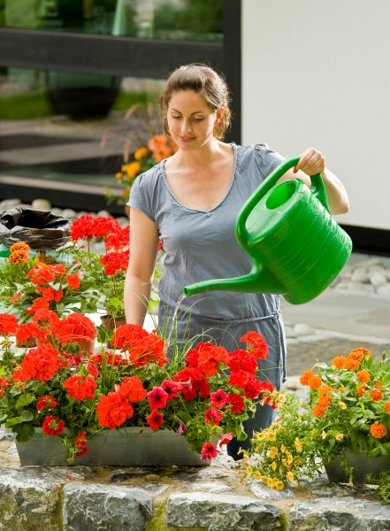Kein Tropfen auf dem heißen Stein: Tipps für die richtige Bewässerung