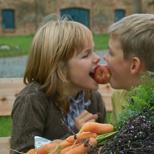 Gemüse und Obst - ohne Grünzeug geht es nicht