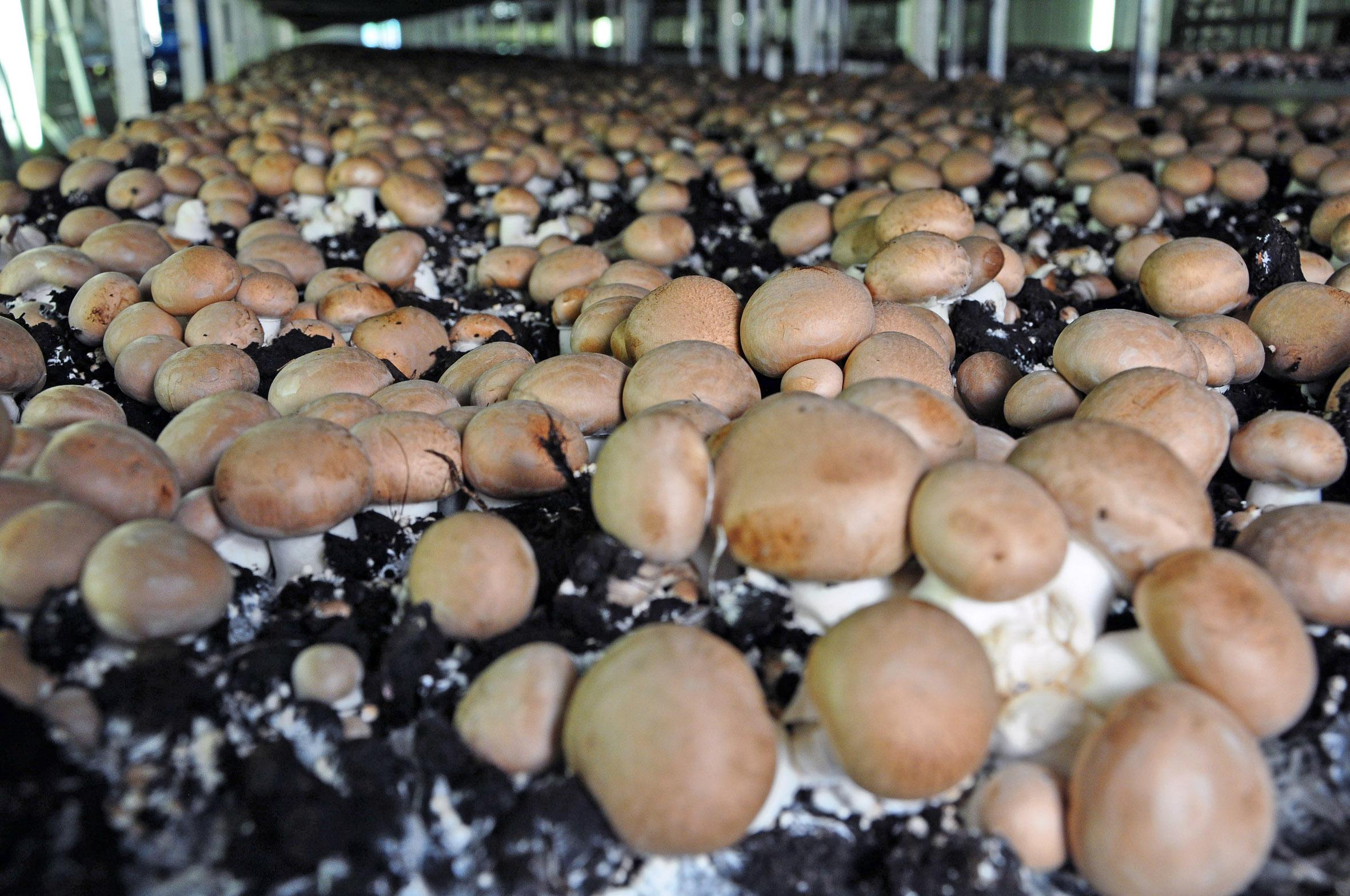 Pilze – Rasantes Wachstum, behutsame Ernte