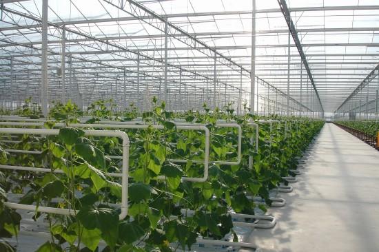 Gemüseanbau - der grüne Daumen allein reicht nicht
