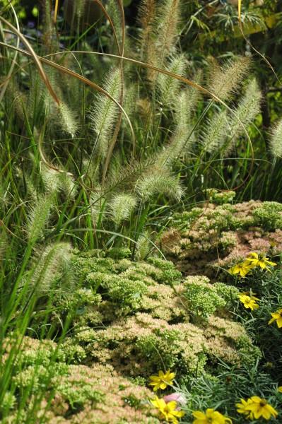 GMH_BDS_2011_28_10 Blühende Stauden im herbstlichen Steingarten