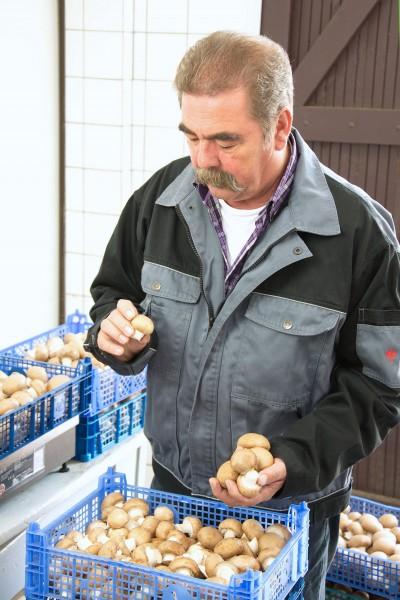 Die Pilzprofis - Beruf Pilzanbauer