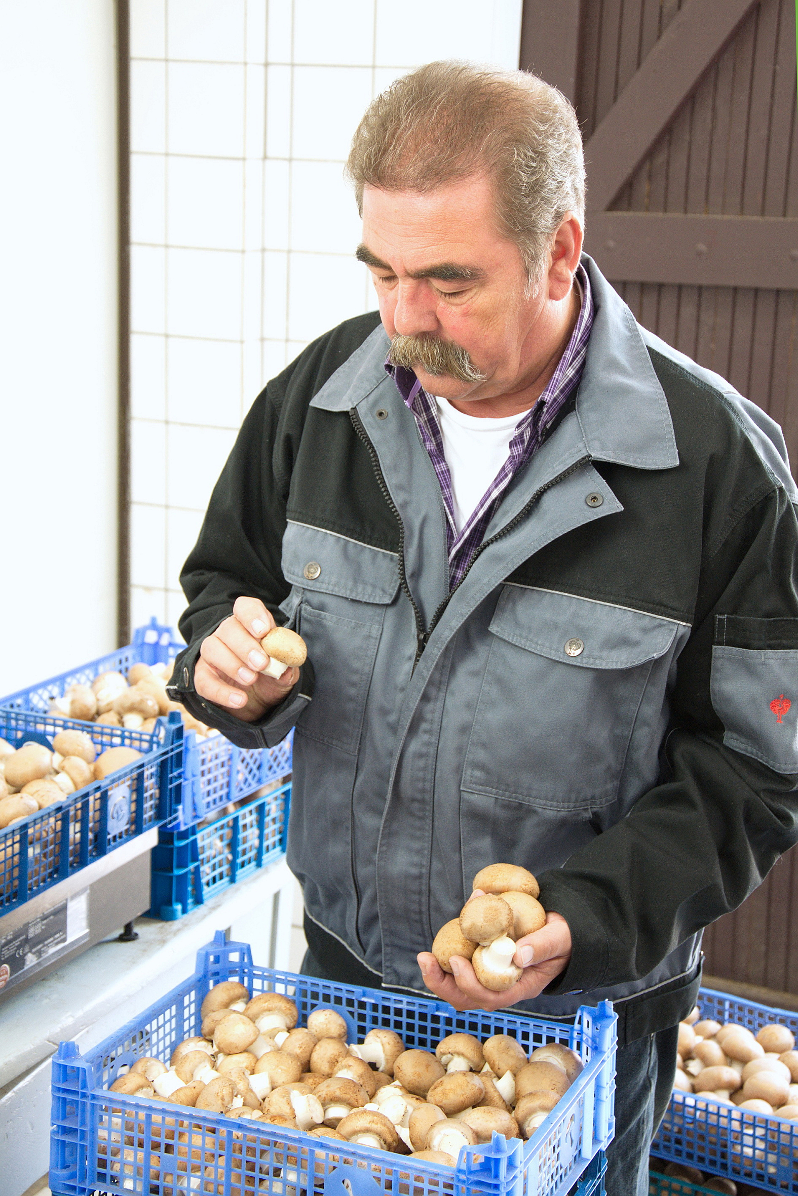 Die Pilzprofis – Beruf Pilzanbauer