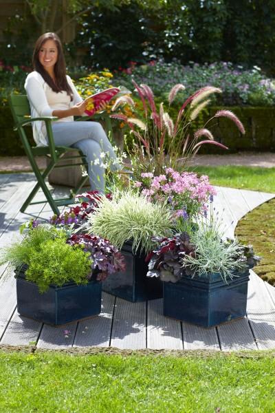 Farbenfeuerwerk: Zum Saisonabschluss trumpfen Balkon und Garten noch einmal richtig auf