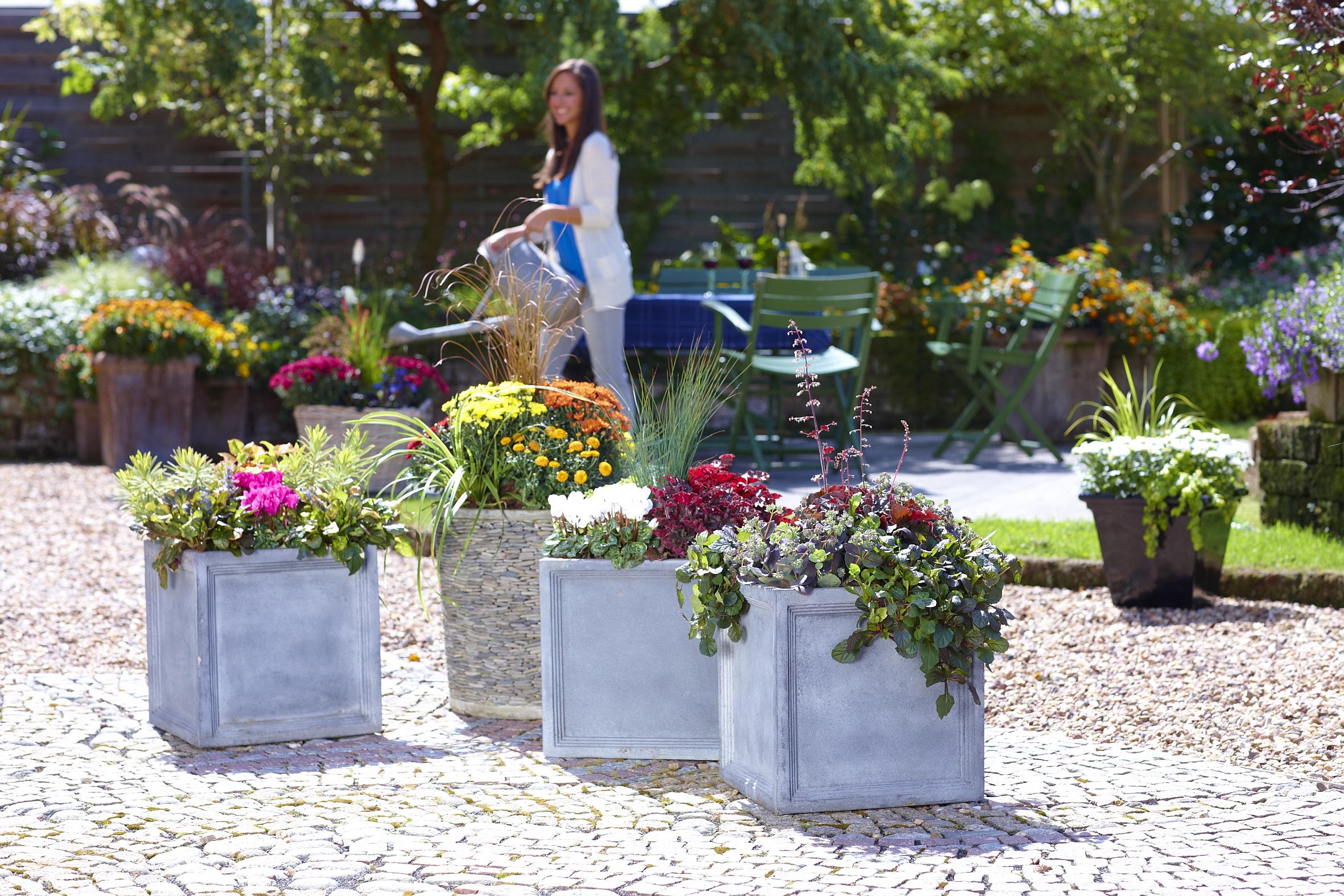 Spektakuläres Finale: Bunte Blätter und Blüten bringen den Herbst zum Leuchten