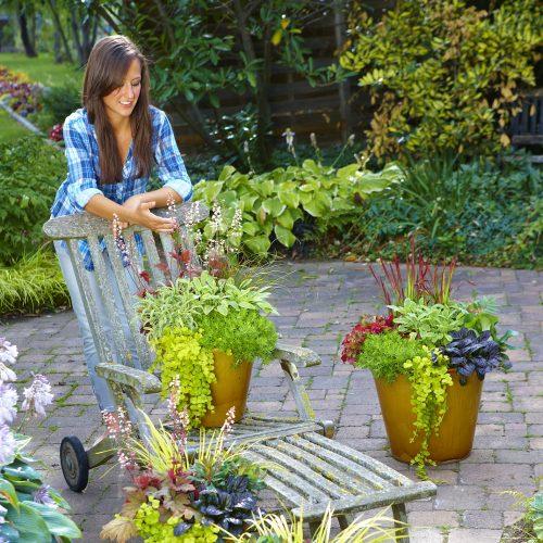 Willkommen Herbst! Dekorative Pflanzen für Beet, Kübel und Kasten