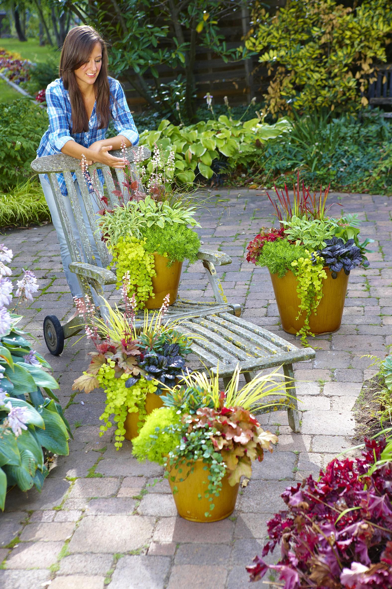 willkommen herbst dekorative pflanzen f r beet k bel und kasten das gr ne medienhaus. Black Bedroom Furniture Sets. Home Design Ideas