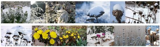 Bildleiste_Stauden im Winter