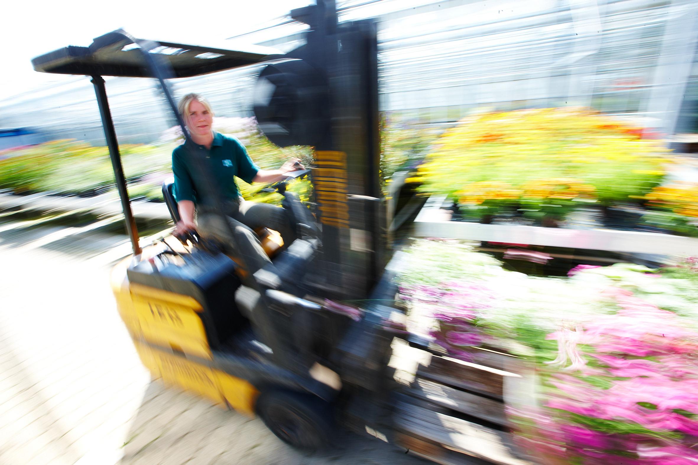 Die Herrscher der Glashäuser – Zierpflanzengärtner haben einen abwechslungsreichen Beruf und ein Händchen fürs Schöne