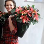 Ein Stern in jedem Haushalt – Die Weihnachtstern-Saison ist eröffnet